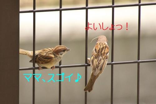 140_20140528220325a63.jpg