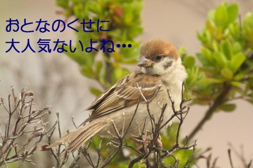 140_20140731220713e1e.jpg