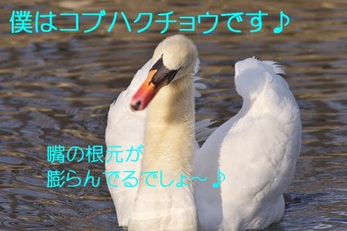 150_201402281339353a4.jpg