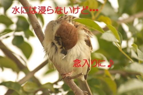 150_20140302184302b6b.jpg