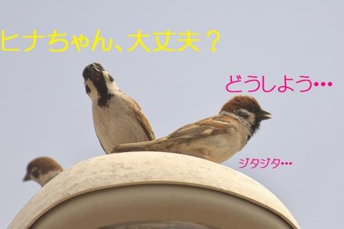 150_20140506204011d0a.jpg