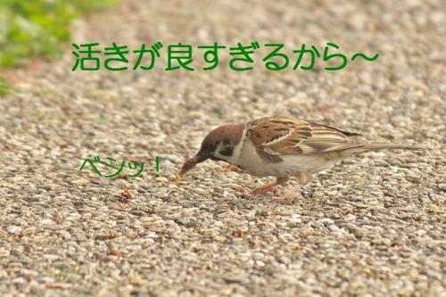 150_2014051119415201a.jpg