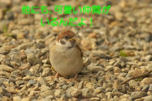 150_20140514210900662.jpg