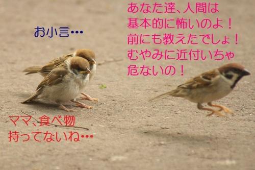 150_201405201846313f2.jpg