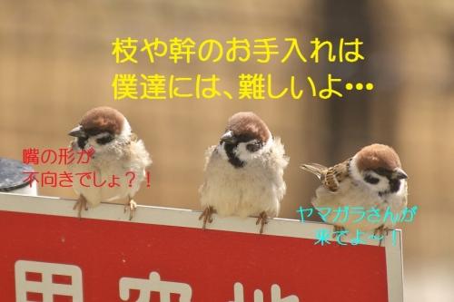 160_20140318185736dac.jpg