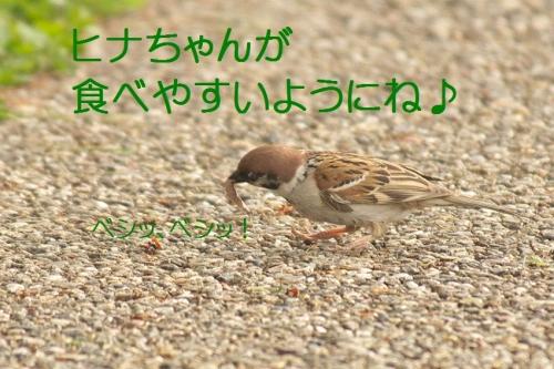 160_2014051119432401d.jpg