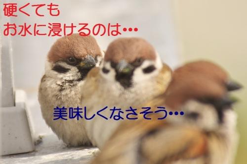 170_2014030521003441b.jpg
