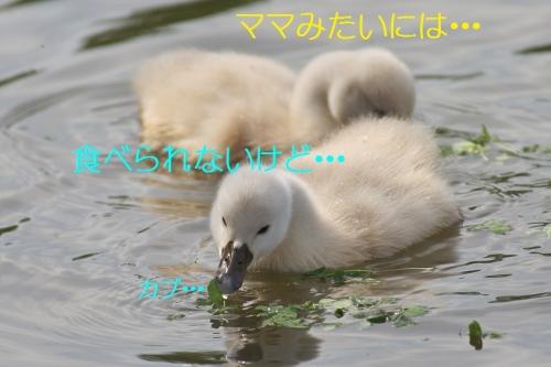 170_201405081829498a8.jpg