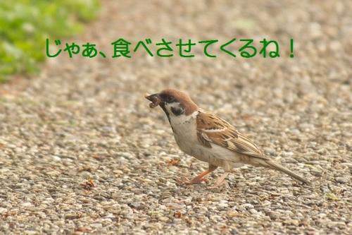 170_201405111943272bc.jpg