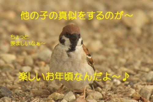 170_201407081918144c2.jpg