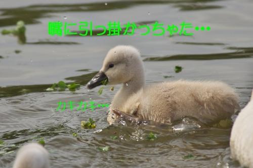 180_201405081829500c7.jpg