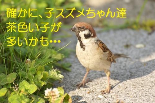 180_201405302132524f4.jpg