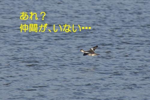 190_20140302184352b81.jpg