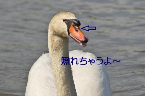 190_201405090140429ea.jpg