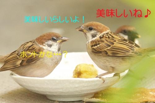 190_20140526214120fc8.jpg