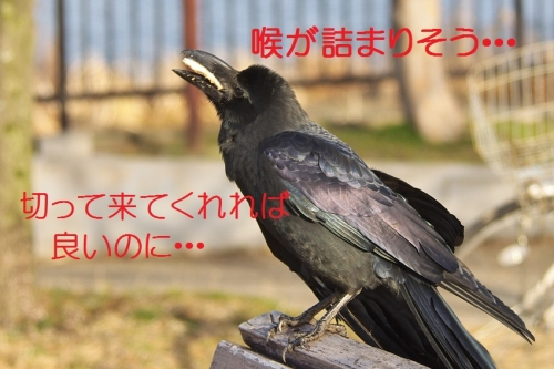 200_20140305210039b54.jpg