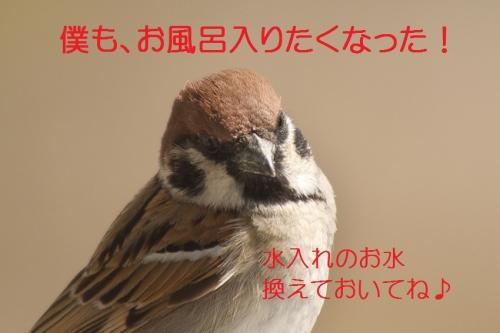200_20140324212959447.jpg