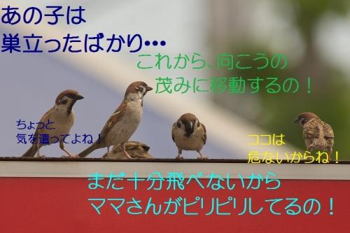 200_201405062041043c4.jpg
