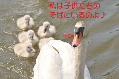 200_2014050901404385e.jpg