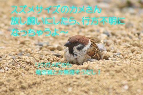 200_20140516213203345.jpg