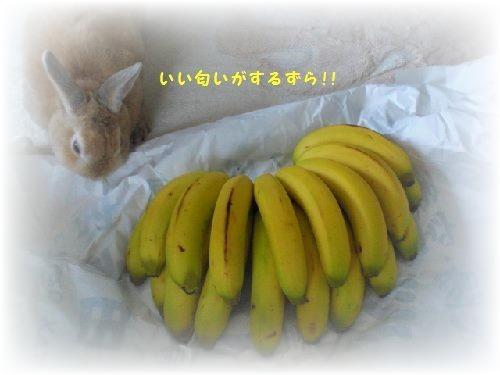 風バナナ6