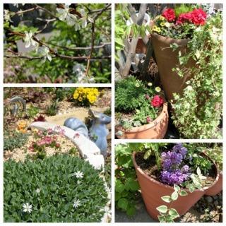 母さんの庭5月