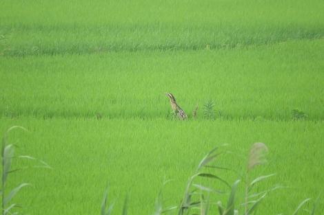 IMGSXIMG_5609b_sannkanogoi.jpg
