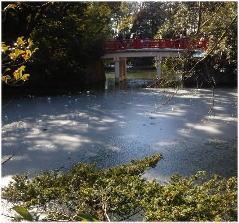 0120-hikawa-j.jpg