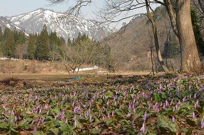 kuroda_5683.jpg