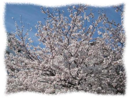 2014年4月1日桜と空