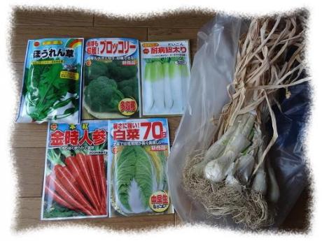 2014年8月17日秋野菜の種苗