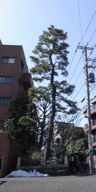 一本松坂3