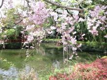 クリエイター K・Takao のブログ-2010041011070000.jpg
