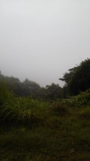 大江山7月20日