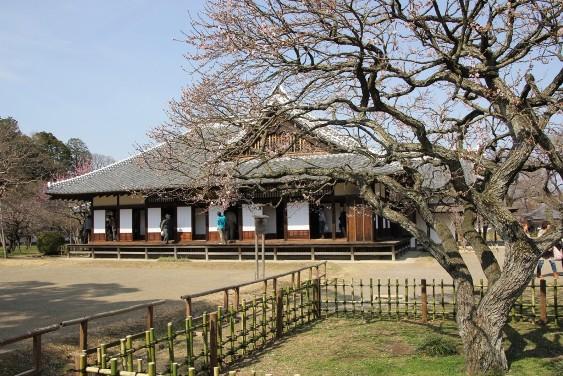 烈公梅と弘道館
