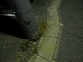 Street lamp02