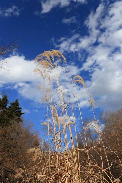 初冬の青空
