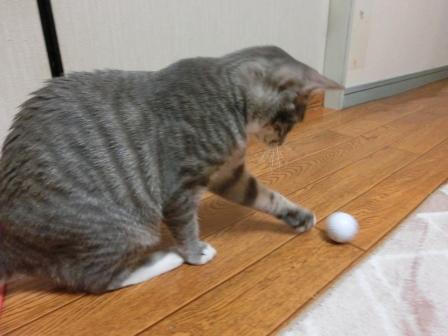 1513ゴルフ (4)