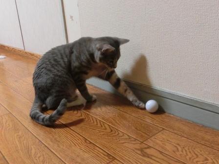 1513ゴルフ (2)