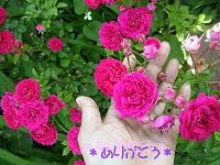 DSCN5607b.jpg