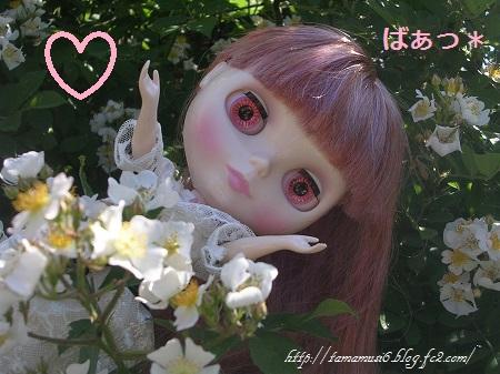 DSCN9937a_20140416233356e8b.jpg