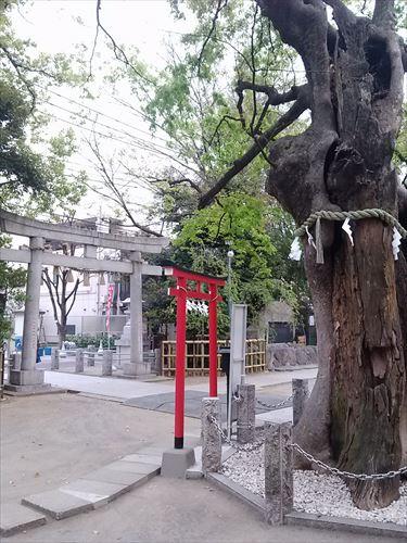 gyouza001_R.jpg