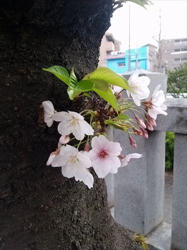 gyouza008_R.jpg