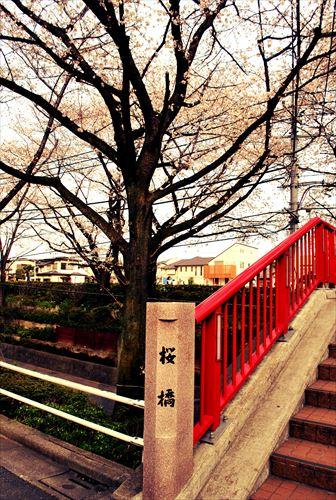 jojosuma002_R_201403292203434b8.jpg