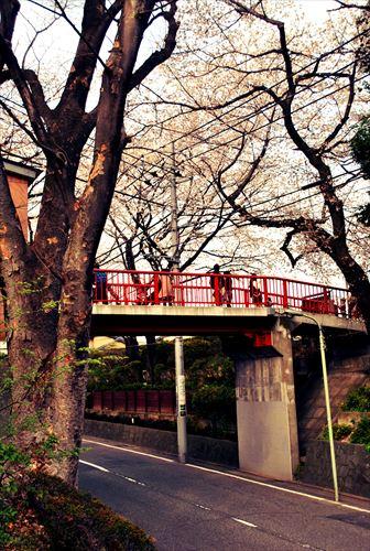 jojosuma003_R_20140329220343de0.jpg