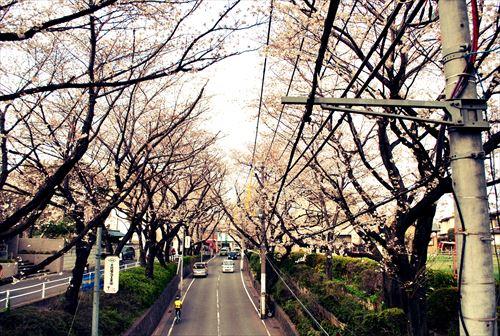jojosuma003_R_201403292205106ed.jpg