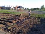 kirakira farm