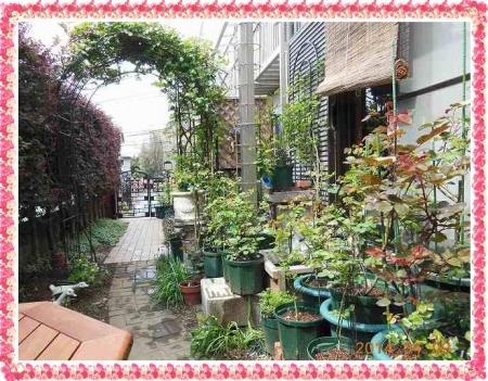 garden409 017