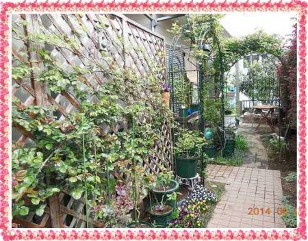 garden409 019