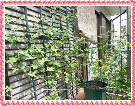 garden409 020